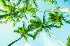 Retro efftect palm trees Royalty Free Stock Photo