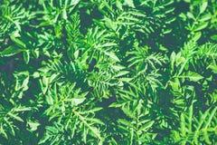 Retro filter green bush Stock Image