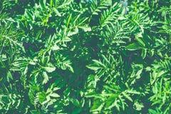 Retro filter green bush Stock Photo