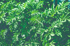 Retro filter green bush Royalty Free Stock Photos