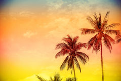 Retro filtered colorful nature background with copy space Royalty Free Stock Photo