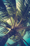 Retro Filtered Palm Tree Detail. In Hawaii royalty free stock photo