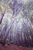 Retro filtered picture of a forest Stock Images