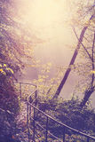 Retro filtered picture of a path in forest Stock Images