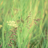 Retro Filtered Spring Grasses Royalty Free Stock Image