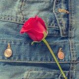 Retro fiore della rosa rossa sulle blue jeans Fotografia Stock