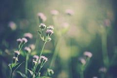 Retro fiori Immagini Stock