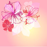 Retro floral background Royalty Free Stock Image