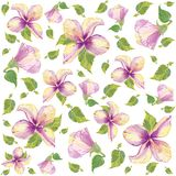 Retro floral background. Hibiscus. Stock Photos