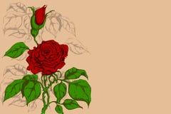 Retro Flower Stock Images
