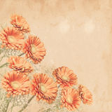 Retro flowers background Royalty Free Stock Photography