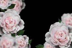 Retro flowers,Vintage Flowers background stock image