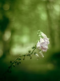 Retro Forest Flowers Royalty Free Stock Images