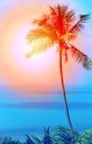 Retro- Foto von einem schönen von Palmen Lizenzfreie Stockbilder