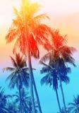 Retro- Foto von einem schönen von Palmen Lizenzfreie Stockfotografie
