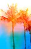 Retro fotografia drzewka palmowe Obrazy Royalty Free