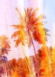 Retro fotografia drzewka palmowe Zdjęcie Royalty Free
