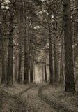 Retro fotografia stilizzata della strada non asfaltata in un legno di pino Immagini Stock Libere da Diritti