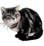 Retro gatto Fotografia Stock Libera da Diritti