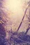 Retro- gefiltertes Bild eines Weges im Wald Stockbilder