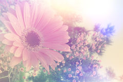 Retro Gerbera daisy image Royalty Free Stock Photos