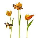 Retro gestileerd beeld van drie vlinders en tulpen royalty-vrije stock foto's