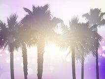 Retro gestileerde palmachtergrond Royalty-vrije Stock Afbeelding