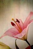 Retro gigli di colore rosa di stile dell'annata royalty illustrazione gratis
