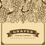 Retro grapes harvest card brown Royalty Free Stock Photo