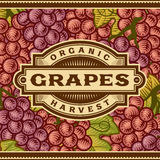 Retro Grapes Harvest Label Stock Photo