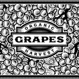 Retro Grapes Harvest Label Black And White Royalty Free Stock Photos