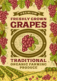 Retro grapes poster Royalty Free Stock Photos