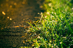 Retro of grass beside the road Stock Images