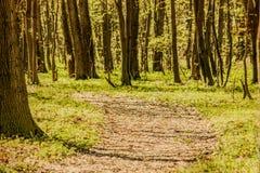 Retro Green forest. Stock Photos