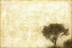 Retro greeting card. Pine tree on retro background with nice texture Royalty Free Stock Images