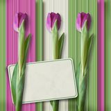 Retro greeting card with tulips Stock Photography