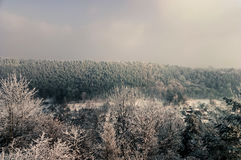Retro härlig bergsikt från skogvinter i Ukraina Royaltyfria Foton