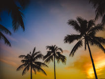 Retro Hawaiiaanse Zonsondergang Royalty-vrije Stock Foto