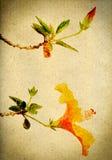 Retro- Hibiscus Karte der Weinlese Lizenzfreie Stockbilder