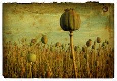 Retro- Hintergrund - Mohnblume-Feld 1 Stockbilder