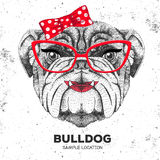 Retro Hipster animal bulldog. Hand drawing Muzzle of animal  bulldog. Royalty Free Stock Images