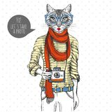 Retro Hipster animal cat with photo camera. Woman model. Retro Hipster animal girl cat with photo camera. Woman model Royalty Free Stock Image