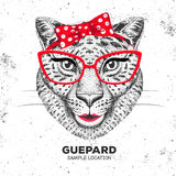 Retro Hipster animal guepard. Hand drawing Muzzle of animal guepard. Royalty Free Stock Images
