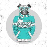 Retro Hipster fashion animal pug-dog dressed up in pullover. Royalty Free Stock Photography