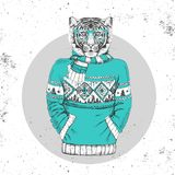 Retro Hipster fashion animal tiger dressed up in pullover. Royalty Free Stock Image