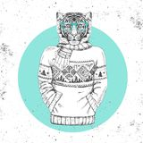 Retro Hipster fashion animal tiger dressed up in pullover. Stock Photography