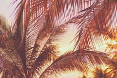 Retro Sunset On Palm Trees. Retro holiday scene of a sunset on tropical beach palm trees stock image