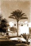 Retro house in Egypt. Retro photo, on which image of three palm trees near white structure in Egypt Royalty Free Stock Images