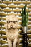 Retro- Hund Stockfoto