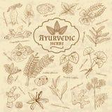 Retro illustratie van Ayurvedic-kruiden Reeks van Web Stock Foto